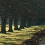 cropped-path-1.jpg