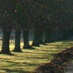 cropped-path.jpg
